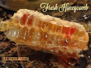 fresh honeycomb spring2014