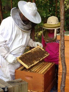 Apiarist inspecting honeybee frame with onlooker
